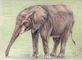 Elephant study in Prismacolor by palemoonwolf