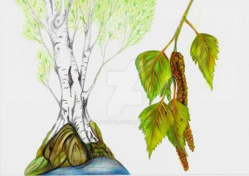 Easy being of Birch by vikaherbs