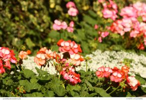 FLOWERS 159_quaddles by quaddles
