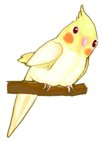 Cockatiel by Penguin-Happiness