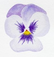 Pansy practice 01 by l-Zoopy-l