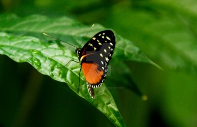 Butterfly Rainforest II by Charmed-n-Captivated