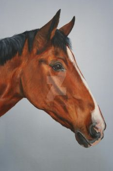 horse portrait by Stephanie-Greaves