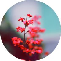 flower cercle II by takingu