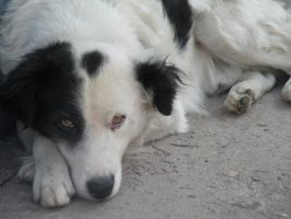 Eyes of a Stray Dog I by leighly
