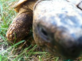 Tortoise. by maybe-is-everything