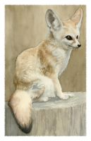 Fennec Fox Study by Deirling