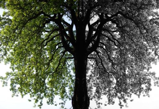 Tree Shade by shoreview