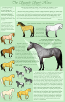 Spanish Sport Horse Breed by JNFerrigno