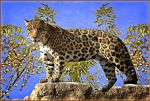 Gorgeous Jaguar by Lior-Art