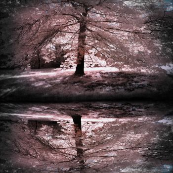Waterscape Back Light Tree infrared by MichiLauke