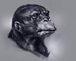 Random monkey by JordyLakiere