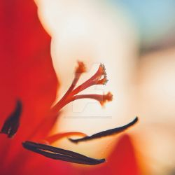 Flower Trumpets Macro by Paseas-Images