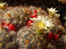 Cactus by PrismTank