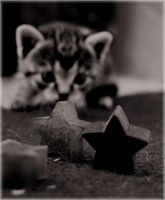 stars and the kitten by damarisz