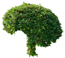 Small Green Bushy Tree PNG.. by AledJonesDigitalArt