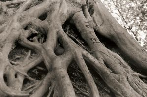 Falls roots by alittlemessi