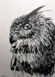 owl sketch by didok80