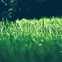 Greener Grass by NanaPHOTOGRAPHY