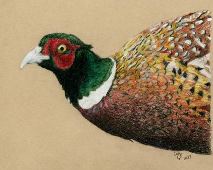 Ring-necked Pheasant- Colored Pencil by lost-nomad07