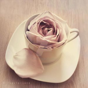 Warm Cup of Rose