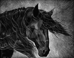 Scratchboard of a Horse in the Wind by shottsy85