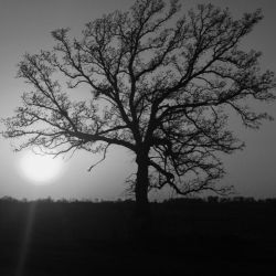 Tree and the Sun by fivepi0nt