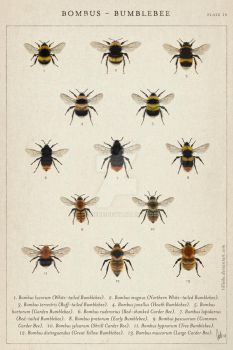 Humble bees by tillieke