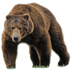 unrestricted hq bear 1 by aio350