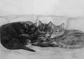 Kitties by GaryMOConnor