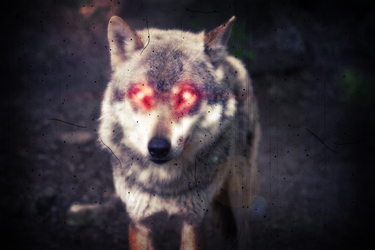 Demon Wolf caught on Camera. by Hoover1979
