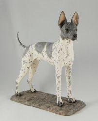 American Hairless Terrier by Kesa-Godzen