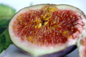 Fig by Tricia-Danby