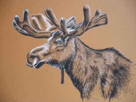 Moose in Vellum - Study by barbcast