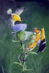 Goldfinches by Hbruton