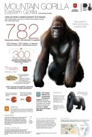 782 mountain gorillas by memuco