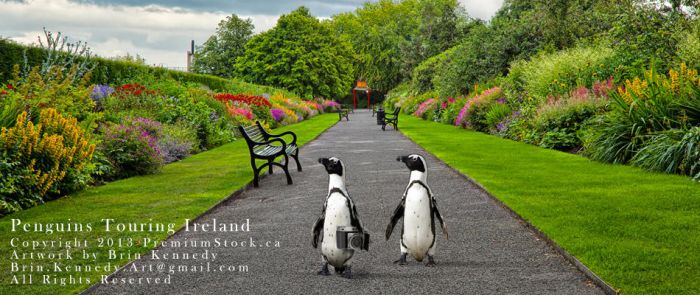Penguins Touring Ireland by slight-art-obsession