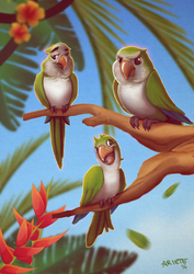 Our Quaker Parrots by thenota