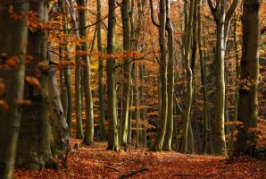 beechen forest I by Wilithin