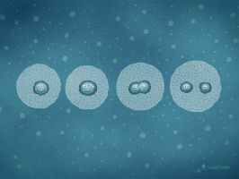 Cell Division by vladstudio