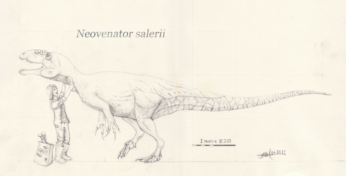 Neovenator salerii scale drawing by TheWoodParable