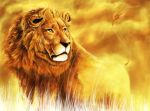 lion of summer by fiboy
