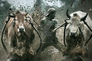 cow race 2 by tribuana