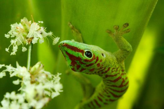 Gecko and Flowers by Vand3r
