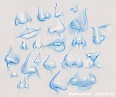 Nose Studies I by BikerScout