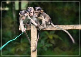 Three Little Monkeys by aajohan