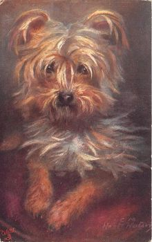 Yorkie by Yesterdays-Paper