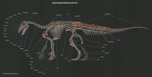 Iguanodon Bernissartensis Skeleton Study by TheDragonofDoom