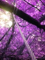 Purple Leaves by Ex-Magician