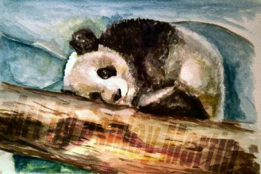 Sleeping Panda by Art-By-Ashley-Martin
